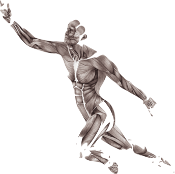 human-body-muscle-motion-anatomy-trains-myofascial-meridians-for-manual-and-movement-therapists-muscular-system-9-11-png-clip-art-thumbnail